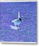 Where's Mine - The Blue Goose Metal Print