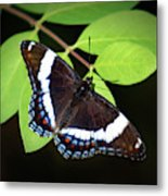 White Admiral Butterfly Metal Print