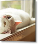 White Cat Relaxing In Windowsill Metal Print