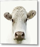 White Cow Metal Print