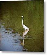 White Egret In Water Metal Print