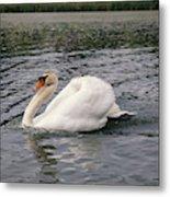White Swan On Lake Metal Print