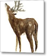 White Tailed Deer Stag With Head Tilted Upwards Metal Print