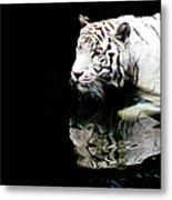 White Tiger In Water Metal Print