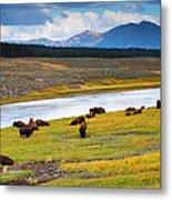 Wild Bison Roam Free Beneath Mountains Metal Print