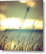 Wild Grasses At Golden Summer Sunset Metal Print