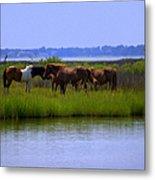 Wild Horses Of Assateague Island Metal Print
