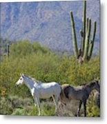 Wild Horses Tonto National Forest Metal Print