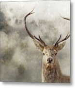 Wild Nature - Stag Metal Print
