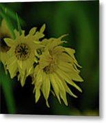Wild Sunflowers In The Wind Metal Print