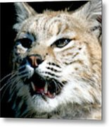 Wildcats Mascot 2 Metal Print