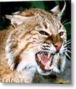Wildcats Mascot 4 Metal Print