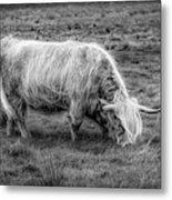 Windblown In Scotland Black And White Metal Print