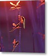Winged Wonders - Dragonflies At Sunset Metal Print