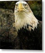 Winter Eagle Metal Print