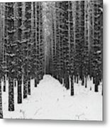 Winter Forest In Black And White Metal Print