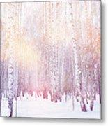 Winter Magic Birch Grove Metal Print