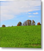 Winter Wheat In October In Southern Ontario Metal Print