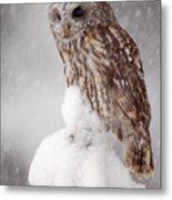 Winter Wildlife Scene With Tawny Owl Metal Print