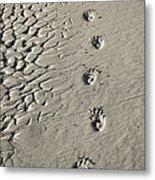 Wombat Footprints On Deserted Beach Metal Print