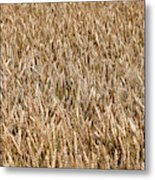 Wonderful Wheat Metal Print