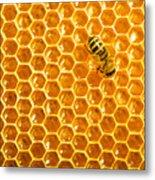 Working Bee On Honeycells Metal Print