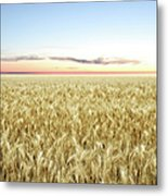 Xxl Wheat Field Twilight Metal Print