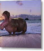 Yawning Coastal Hippo Hello Metal Print