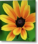 Yellow Flower Black Eyed Susan Metal Print