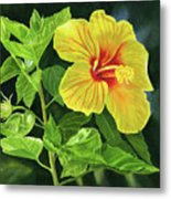 Yellow Hibiscus With Bright Green Leaves Metal Print