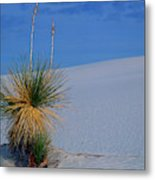 Yucca Plant In Sand Dunes In White Sands National Monument, New Mexico - Newm500 00112 Metal Print