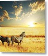 Zebras At Sunset Metal Print