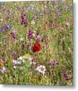 Mixed colourful wildflowers Metal Print