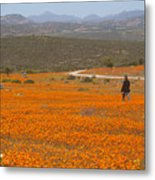 A lone woman walks through a large field of orange Namaqualand Daisies (Dimorphotheca spp) looking out towards the Kamiesberg mountains, South Africa Metal Print