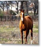 Bay Horse 3 Metal Print