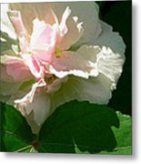 China Rose 1 Metal Print