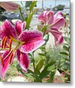 Close-Up Of Pink Flowers Blooming Outdoors Metal Print