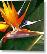 Crane Flower Metal Print