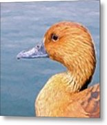 Ducky Metal Print