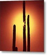 Encinitas Cactus Metal Print