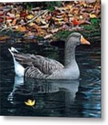 Great White-fronted Goose Metal Print