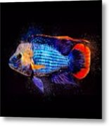 Green Terror Cichlid Fish Metal Print