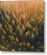 High Angle View Of Trees In Forest Metal Print