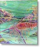 Lobster Crossing Metal Print