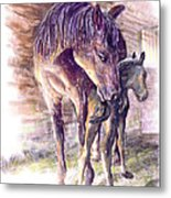 Maternal Bond Five Hours Old Arabian Mare With Newborn Foal Metal Print