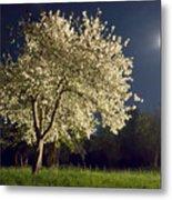 Moonlit Blooming Tree Metal Print