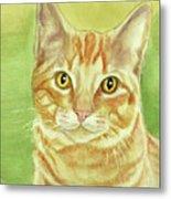 Orange Tabby Portrait Metal Print
