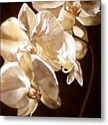 Orchids Under The Moonlight  Metal Print
