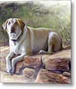 Restrained Energy- Yellow Labrador Retriever Portrait Metal Print