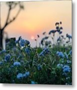 Sunset Behind Flowers Metal Print